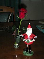 christmas_rose.jpg